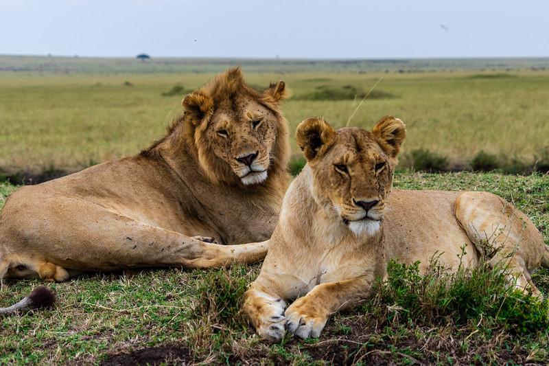 Kenya 2015-05492.jpg