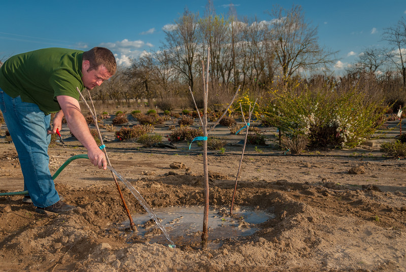 Photos showing the 3 in space of 1 tree planting. Three apple trees in this combination.