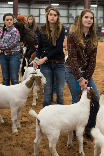Hays_County_Show-0023.jpg