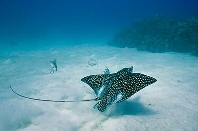 Caymans (Underwater)
