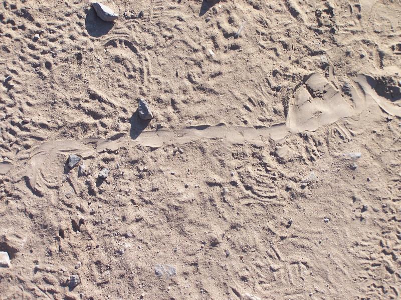 Snake tracks across the trail.