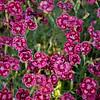 amanda abel photography