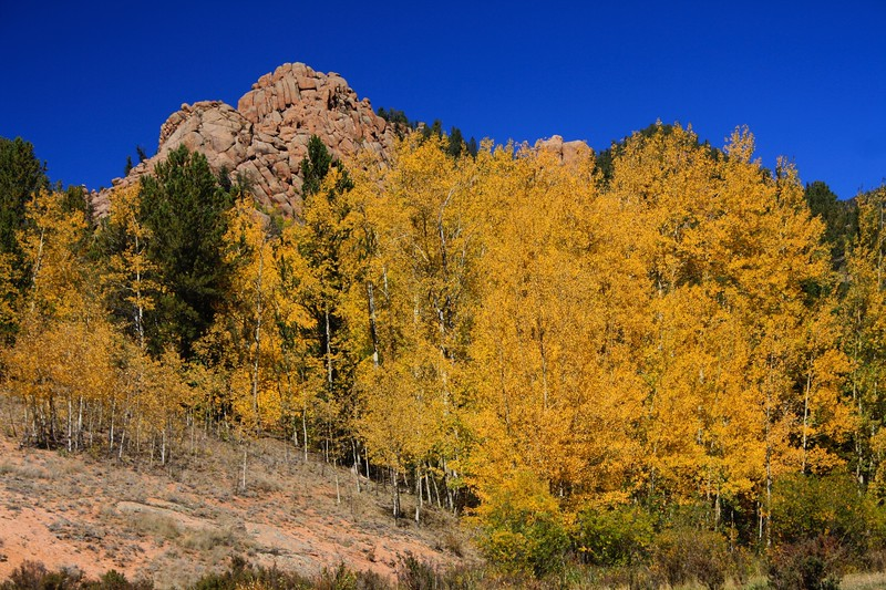 Cathedral Golden Aspens
