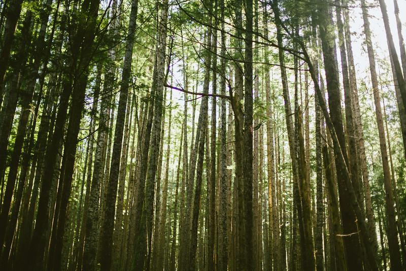 150913_Nikki_Forest_5293.jpg
