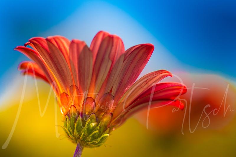 flowers_190.jpg