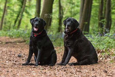 Buster & Elvis