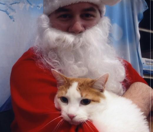 The Kitties See Santa  (12.06.14)