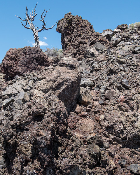 An Old Pine Grew Out of a Lava Flow in Craters of the Moon National Monument