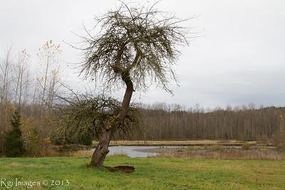 Green River 20131117