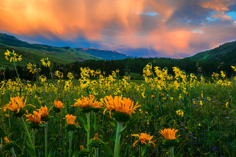 CRESTED BUTTE-0122-Edit-Edit.jpg