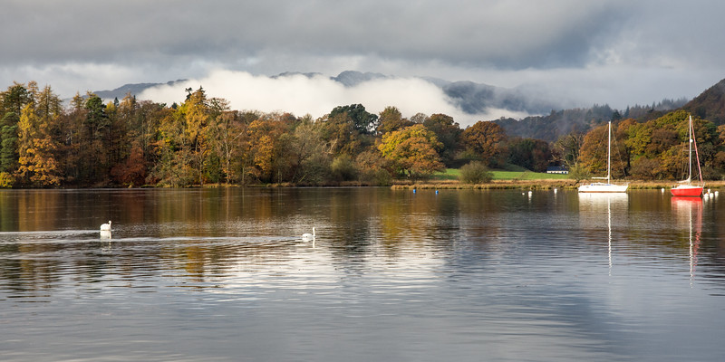 Swans on Windermere lake