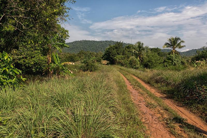 Kampot Pepper Plantation