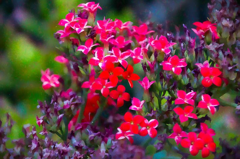 june 30 - sloper garden.jpg