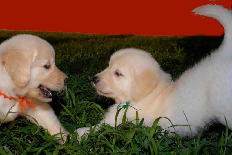 red back pups.jpg