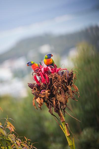 Parrots01.jpg