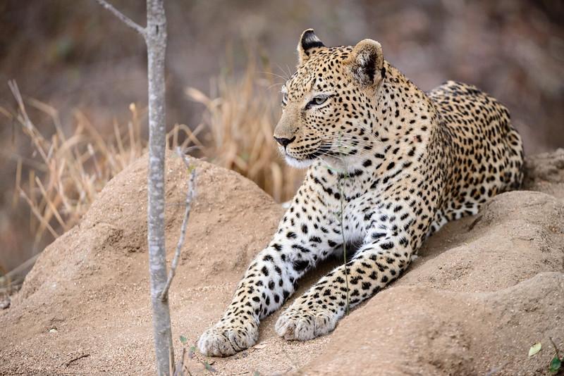 LeopardHills-20150827-5084.jpg