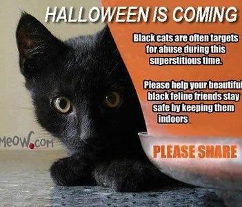 black cat sfety.jpg