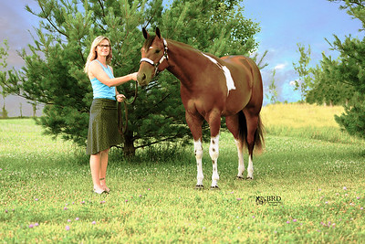 2016 Horse/Livestock/Pet Photo Sessons