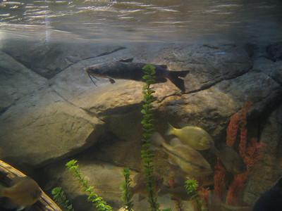 Tempe, AZ Aquarium