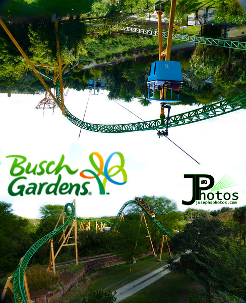 Busch Gardens, FL.jpg
