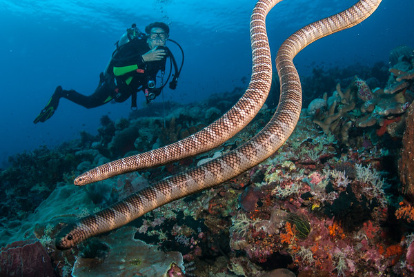 Forgotten Islands Fish & Critters  2018