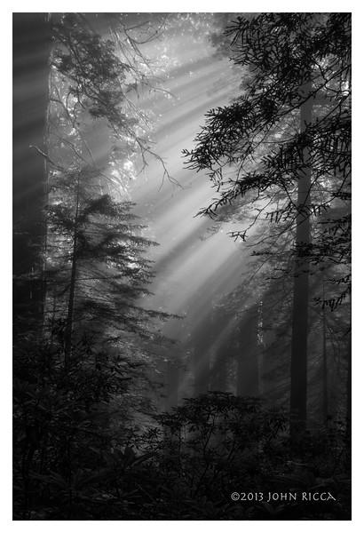 North Coast Redwood Forest 8.jpg