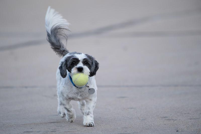 LuLu - Brady - Cooper Play Friends (24 of 109).jpg