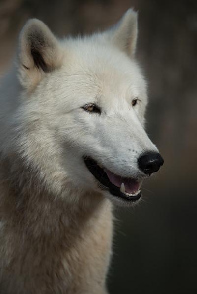 Seacrest Wolves_-62.jpg