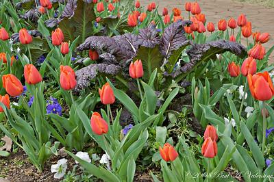 Grapevine Botanic Garden Flowers 03-23-08