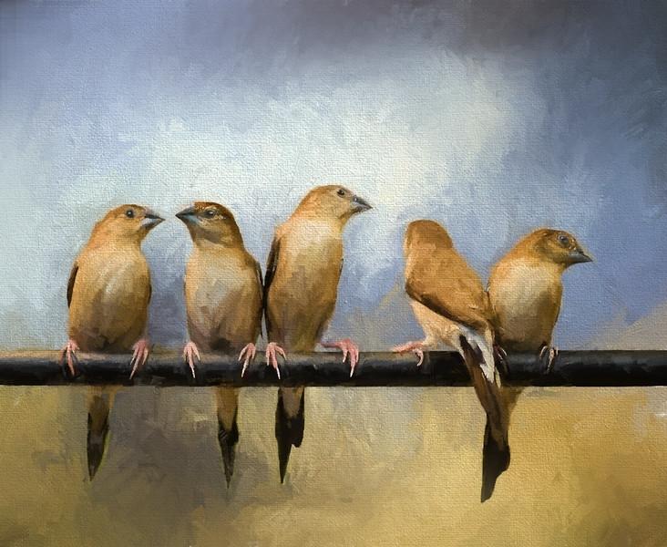 birds-on-perch_painter-Edit.jpg