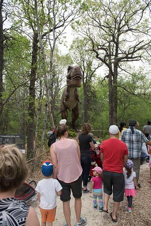 DAVID LIPNOWSKI / WINNIPEG FREE PRESS  Visitors check out the Tyrannosaurus Rex at the Dinosaurs Alive! exhibit at the Assiniboine Park Zoo Sunday May 22, 2016.