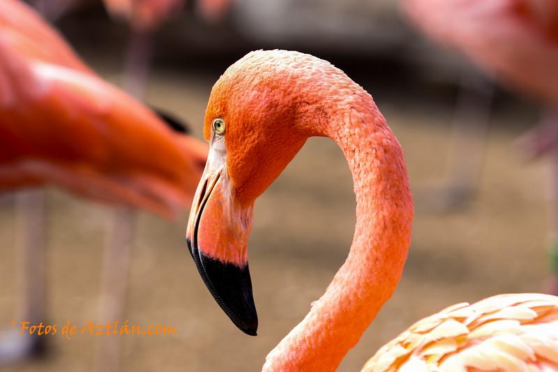 flamingo2 IMG_0985.jpg