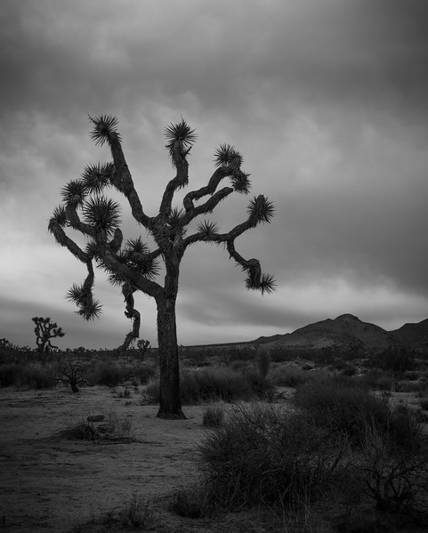 Joshua Tree-6916.jpg