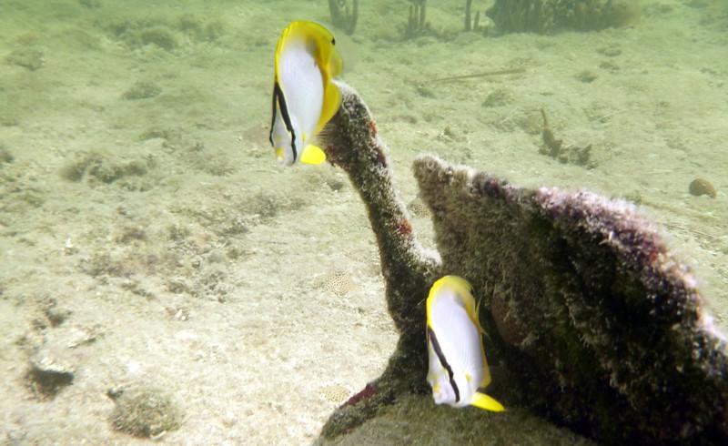 Florida-Keys-Key-West-Snorkeling-05.JPG