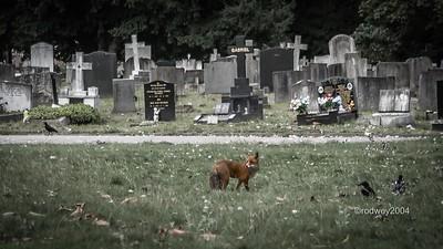 London Vampires, Goths & Cemeteries