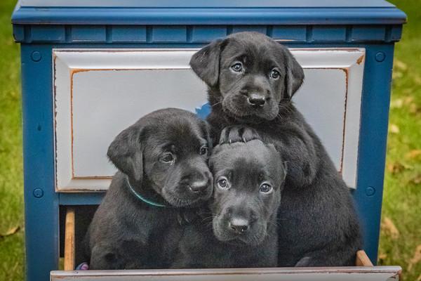 Shadow Puppies 2