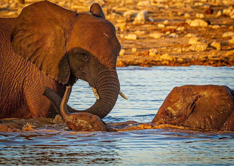 elephant mom & calf bathe 2 (1 of 1).jpg