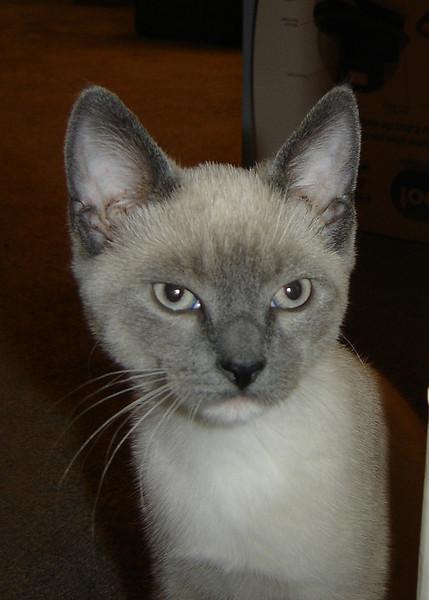 2007 06 22 - Cats 01.JPG