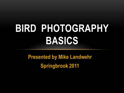 Bird Photography Basics