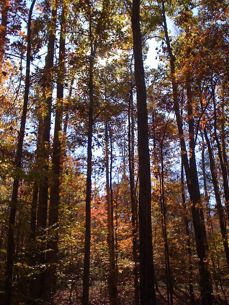 Yeah, we have some TALL Trees on our property!