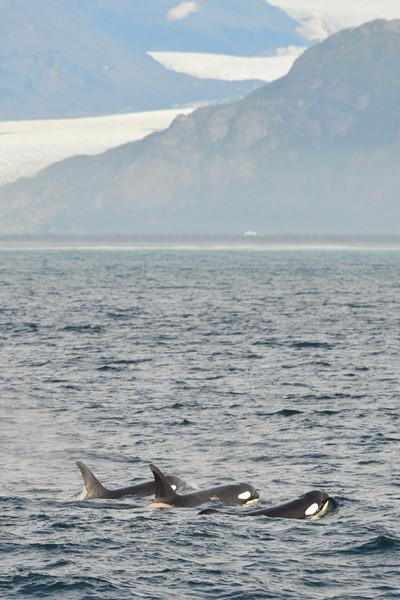 Alaska Fall 2013 - 55.jpg