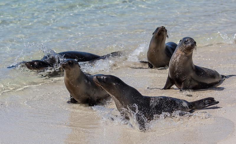Galapagos_MG_4899.jpg