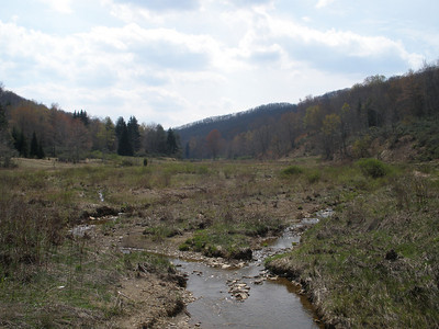 Laurel Fork Spring '10