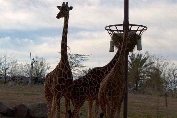 2010-02-06 Phoenix Zoo