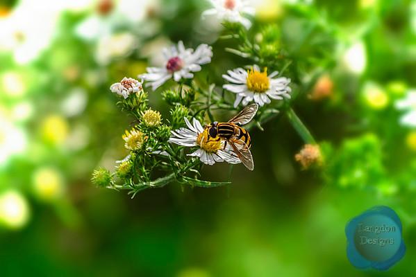 Bees (Summer 2014)