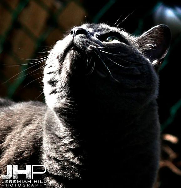 JHP13-5MAY1_0078.jpg