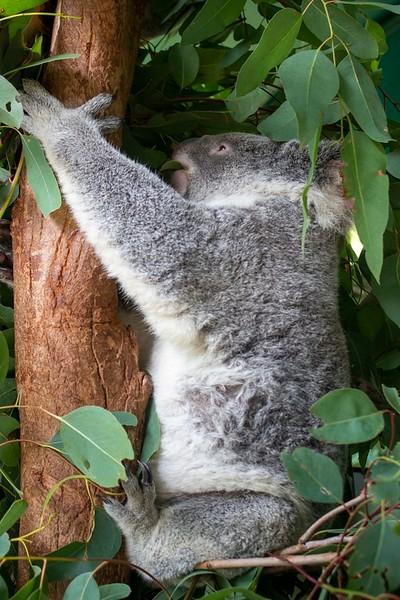 Australia_302.jpg