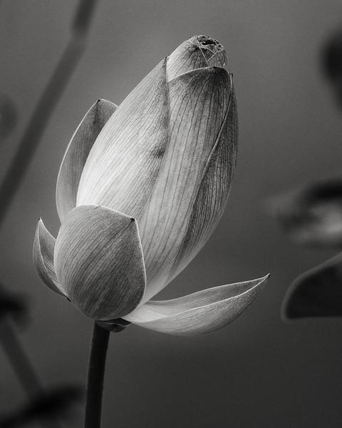 lotus-11.jpg