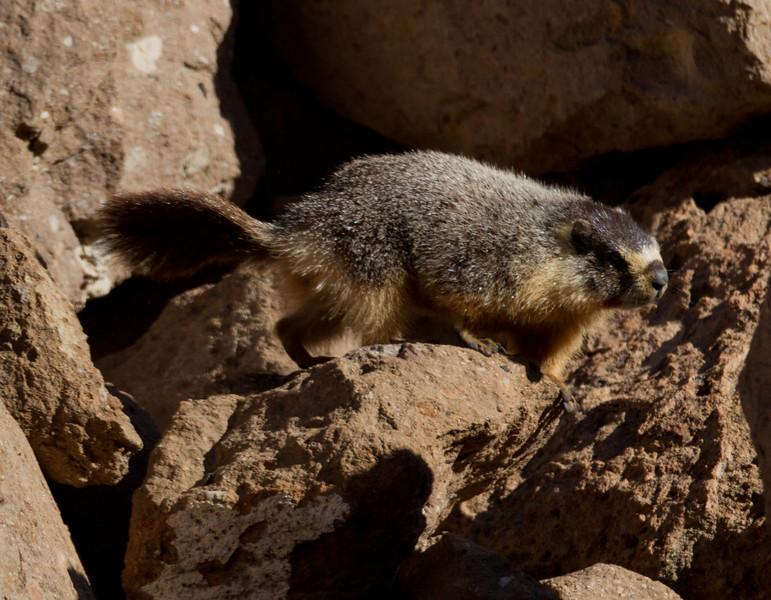 Marmot Upper Gorge   Mammoth Lakes 2014 03 22-2.CR2