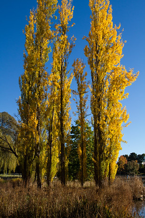 Canberra's Autumn Colours